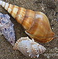 My Seashells Poster by  Photographic Art and Design by Dora Sofia Caputo