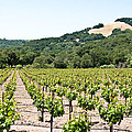 Napa Vineyard with Hills Print by Shane Kelly