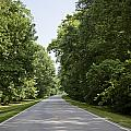 Natchez Trace Parkway in Cobert County Poster by Carol M Highsmith