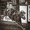 National Stock Show Bareback Riding Print by Priscilla Burgers
