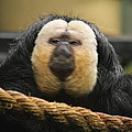 National Zoo - Mammal - 01136 Print by DC Photographer