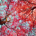 Nature Abstract #2 - Colorful Red And Blue Abstract Nature Fine Art Photograph - Digital Painting  Poster by Artecco Fine Art Photography - Photograph by Nadja Drieling