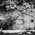 Natures Awning BW Print by Julie Hamilton
