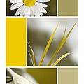 Nature's Beauty Golden Flowers Collage Print by Christina Rollo