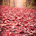 Nature's Red Carpet Revisited Print by Edward Fielding
