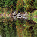 Natures Reflection Print by Mark Papke