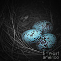 Nest of 3  Print by Trish Mistric