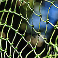 Netting - Abstract Poster by Kaye Menner