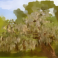 New Orleans Spanish Moss on Live Oaks Print by Christine Till