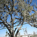 New Orleans - Swamp Boat Ride - 12122 Print by DC Photographer