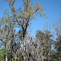 New Orleans - Swamp Boat Ride - 121265 Print by DC Photographer