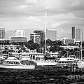 Newport Beach Skyline Black and White Picture Print by Paul Velgos