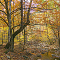 North Creek Autumn - Mid Afternoon - 04043 Print by Byron Spencer