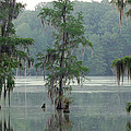 North Florida Cypress Swamp Print by Rich Leighton