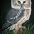Northern Saw-whet Owl Print by Sharon Duguay