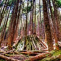 Northwest Old Growth Print by Spencer McDonald