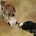 Nose To Nose Dogs Print by Linsey Williams
