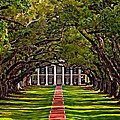 Oak Alley II Print by Steve Harrington