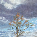 Oak and Clouds Print by Jymme Golden