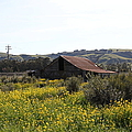 Old Barn in Sonoma California 5D22234 Print by Wingsdomain Art and Photography
