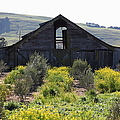Old Barn in Sonoma California 5D22236 Poster by Wingsdomain Art and Photography
