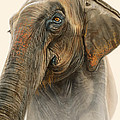Old Lady of Nepal 2 Print by Aaron Blaise