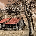 Old Mountain Cabin Poster by Debra and Dave Vanderlaan