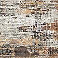 Old painted wood abstract No.1 Print by Elena Elisseeva