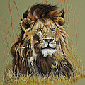 Old Warrior African Lion Poster by Mary Dove