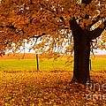 One Autumn Tree Print by Terri Gostola