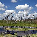 Orlando Wetlands Cloudscape Print by Mike Reid