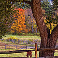 Out to Pasture Print by Joann Vitali
