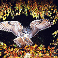 Owl About to Land Print by Manfred Danegger