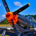 P-51 Mustang - Speedball Alice Print by David Patterson