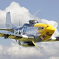 P51 Ferocious Frankie Print by Pat Speirs