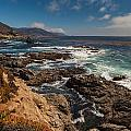 Pacific Coast Life Print by Mike Reid
