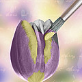 Painting A Tulip Poster by Amanda And Christopher Elwell
