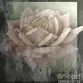 Pale Rose Photoart Poster by Debbie Portwood