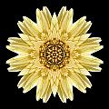 Pale Yellow Gerbera Daisy I Flower Mandala Poster by David J Bookbinder