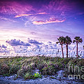 Palms on the Beach Print by Marvin Spates