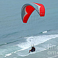 Paragliding at Torrey Pines Poster by Anna Lisa Yoder
