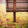 Park Bench in Autumn Print by Edward Fielding