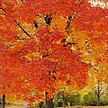 Park in fall Print by Yoshiko Wootten