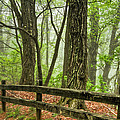 Path into the Forest Print by Debra and Dave Vanderlaan