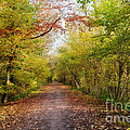Pathway through Sunlit Autumn Woodland Trees Print by Natalie Kinnear