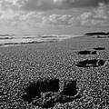 Paw Prints in the Sand Poster by Tracey McQuain