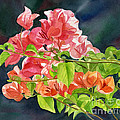 Peach Colored Bougainvillea with Dark Background Print by Sharon Freeman