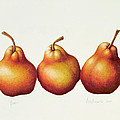 Pears Poster by Annabel Barrett