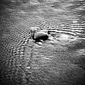 pebble in the water monochrome Poster by Raimond Klavins