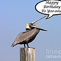 Pelican Birthday Card Print by Al Powell Photography USA